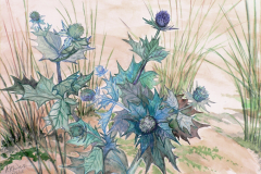 Sea-Holly-adj